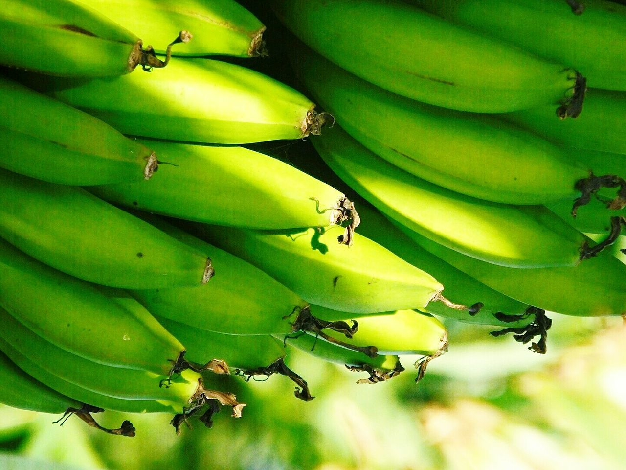 Plantains Food Food Photography Green Green Green Green!  Kampala Foodie Picoftheday Pictureoftheday PicturePerfect