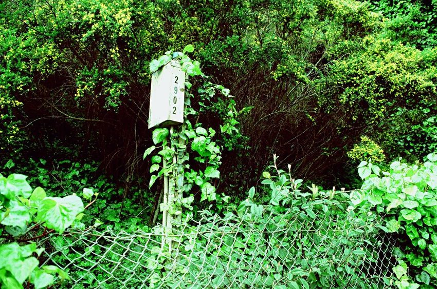 Zenit122 Plant No People Growth Lush Foliage Ivy Outdoors Film Lomo Xpro 100 Koduckgirl