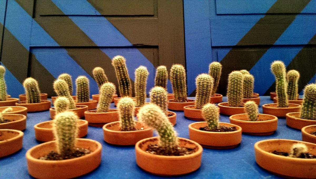 Cactus No People Indoors  Growth Beauty In Nature kaktus Kaktusblume Kaktusstacheln Kaktuslandschaft Kaktusse EyEmNewHere