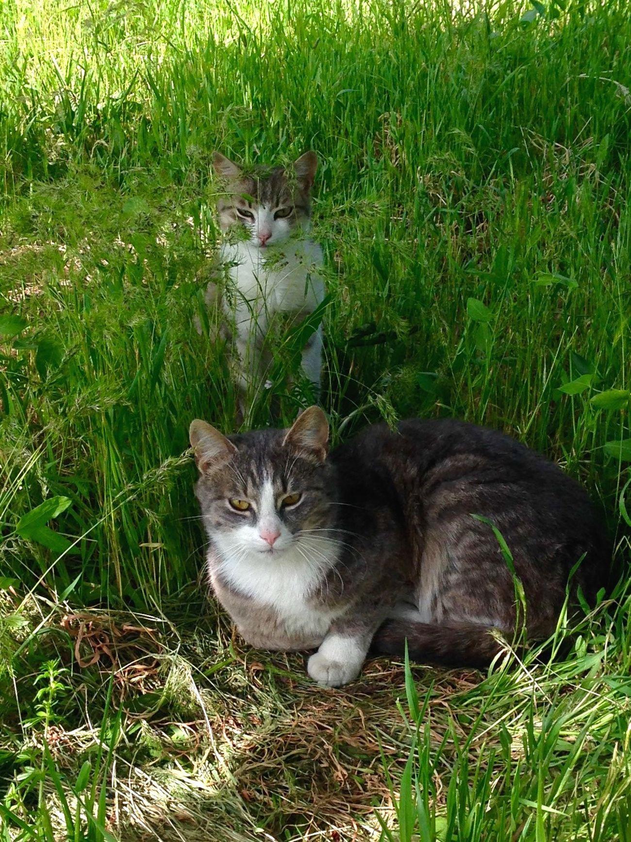 Cats 🐱 Cats Of EyeEm Cat♡ Cat Cat Lovers Cats Homeless Cats Котик Коты котэ кот
