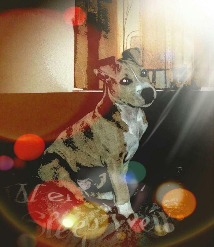 Lotsoffilters Dogslife Mydog Dog❤ Dog Filter Taking Photos Enjoying Life Relaxing Welcome Welcomeweekly Pet Pets Pastel Power