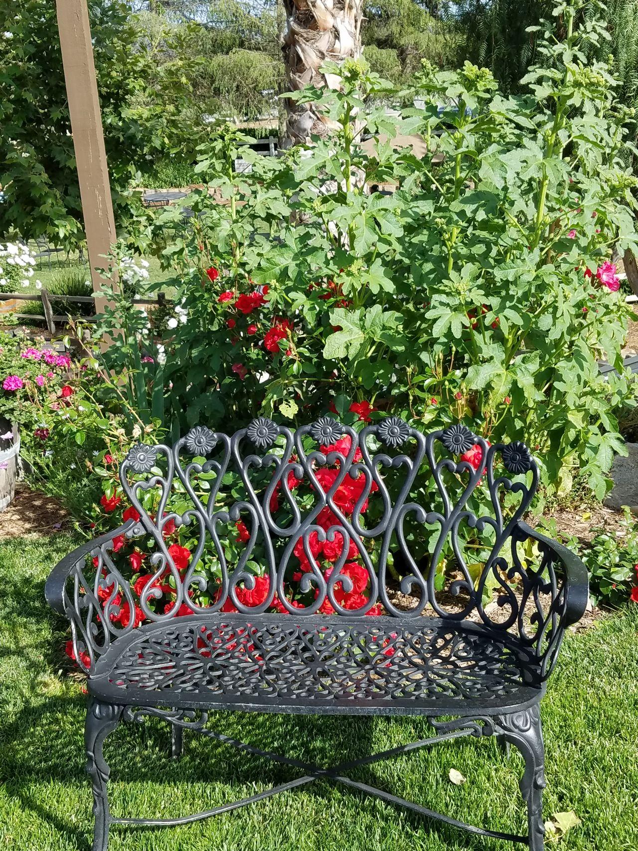 Garden Flowers Benchlovers Outdoors❤ Sunlight Flower Garden Nature Grass No People Sunlight Colorful Flowers