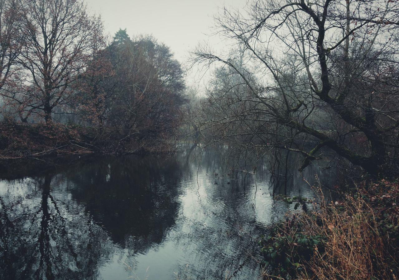 ... today's River ... Water Reflection Nature Hafren Severn Trees Fog Foggy Winter Wales Newtown Powys Somber река туман деревья сегодня  Rio