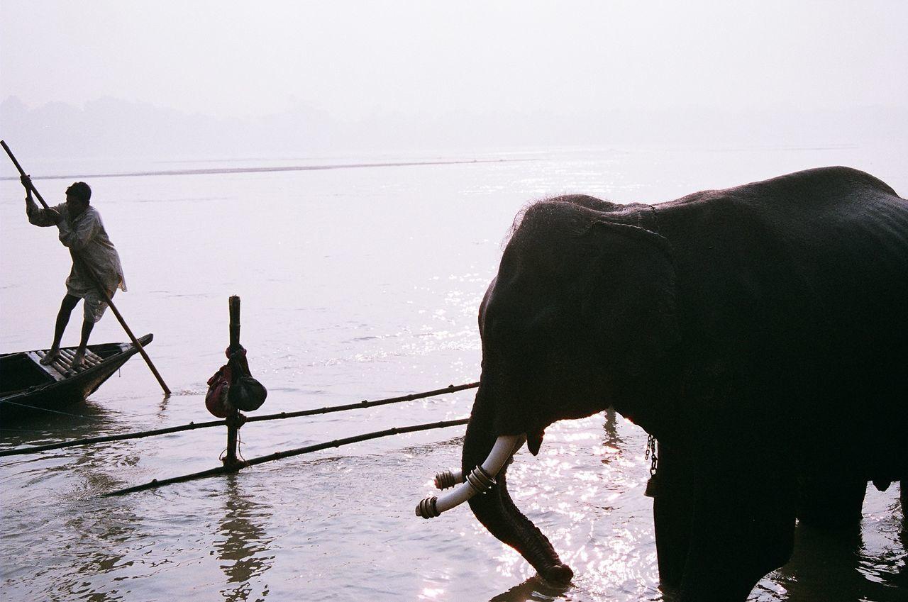 Beautiful stock photos of elefant, water, domestic animals, mammal, nature