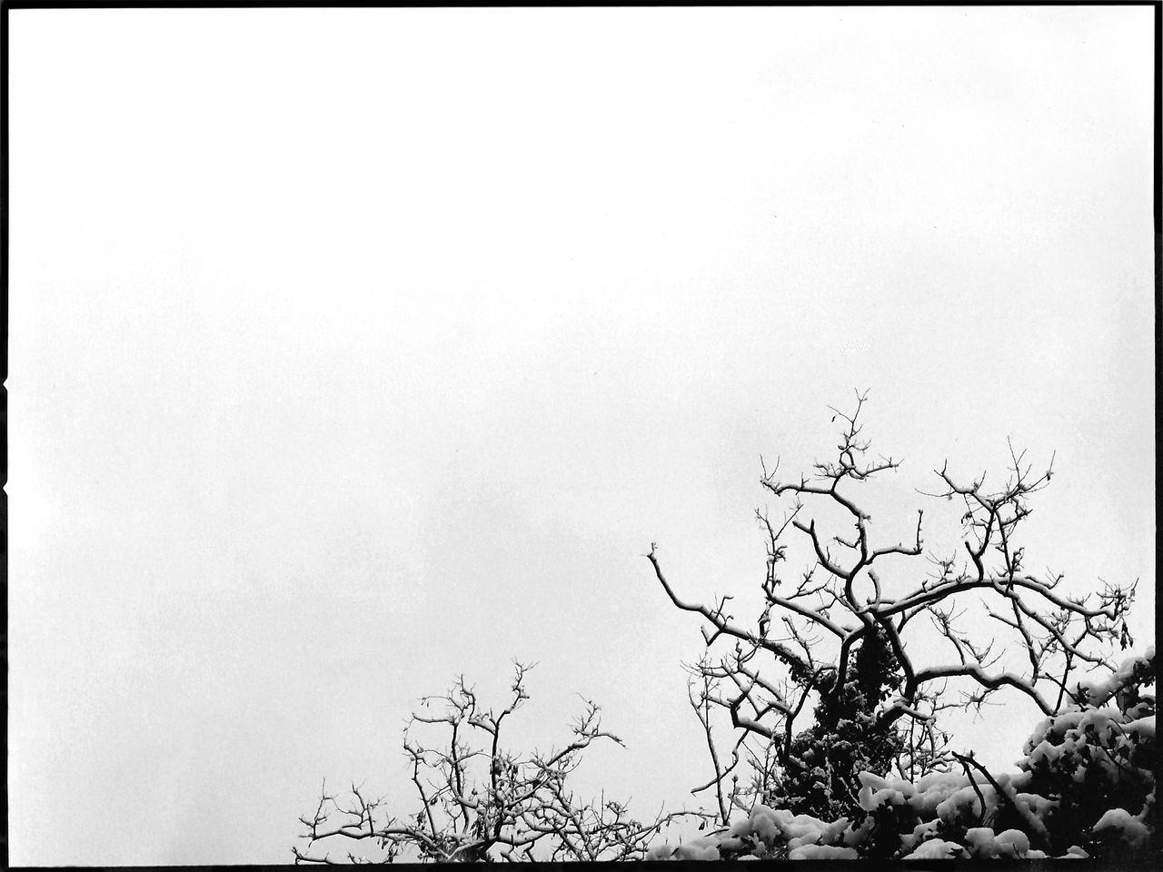 120 Film Beauty In Nature Blackandwhite Blancoynegro Branch Collcerola Film Photography Hasselblad Outdoors Sky Snow ❄ Tree Treetop