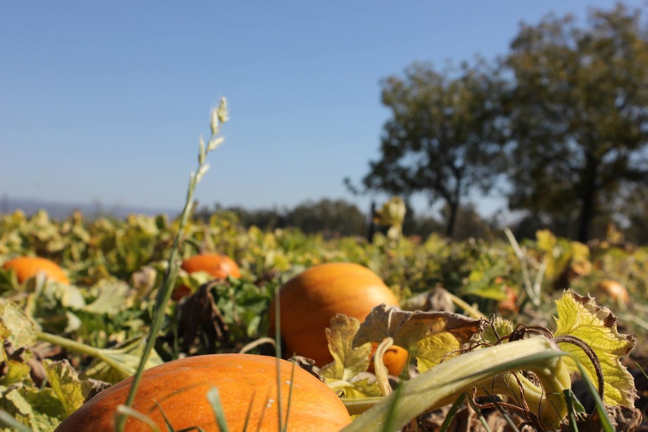 Beautiful stock photos of pumpkin, Abundance, Agriculture, Autumn, Blue