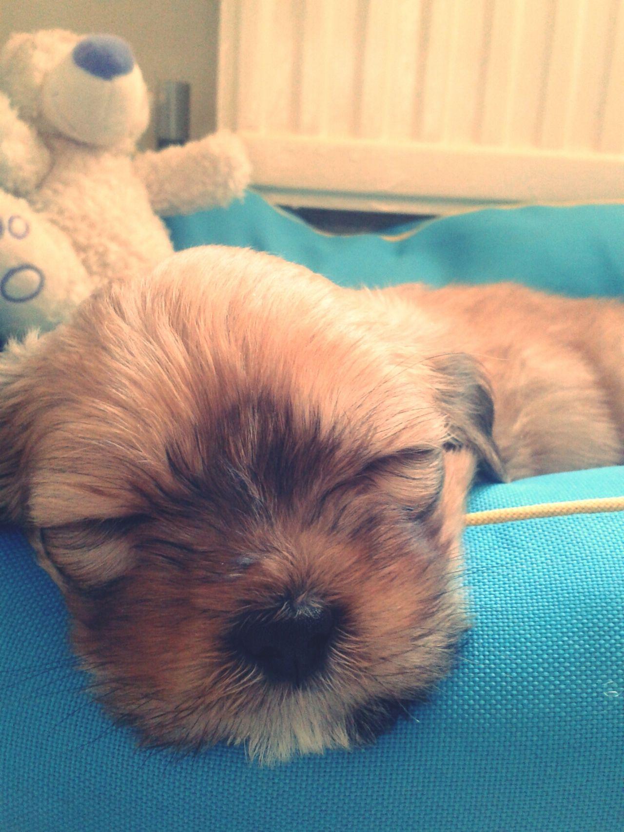 Puppy❤ Puppy My Puppy