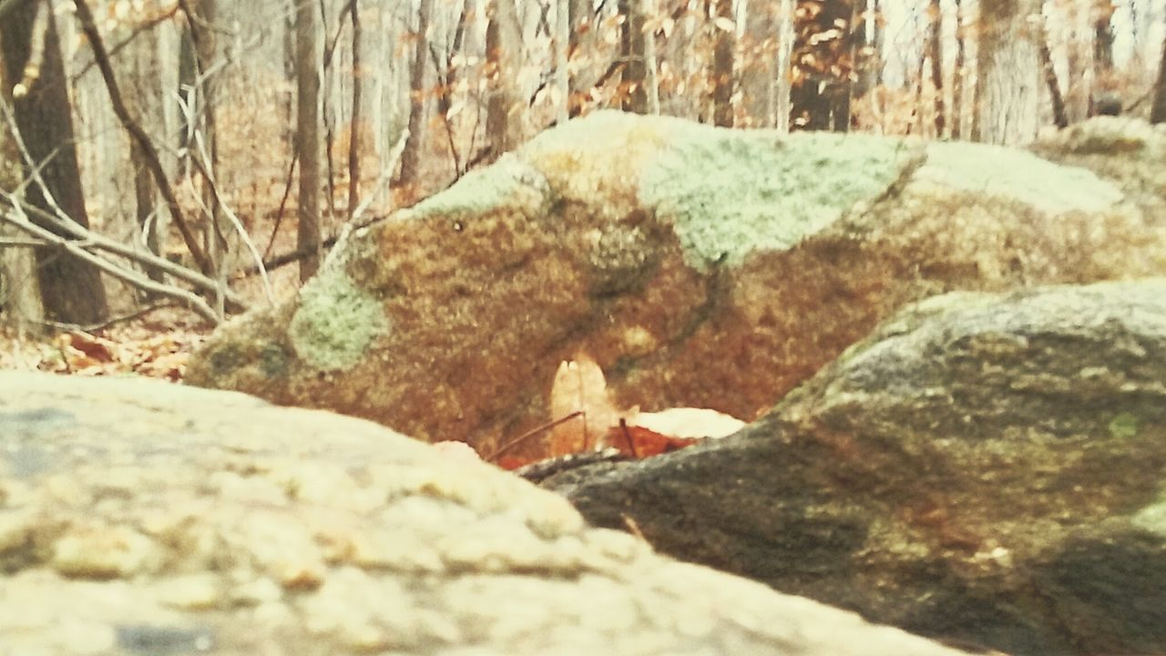 rock - object, no people, textured, day, nature, outdoors, close-up, beauty in nature