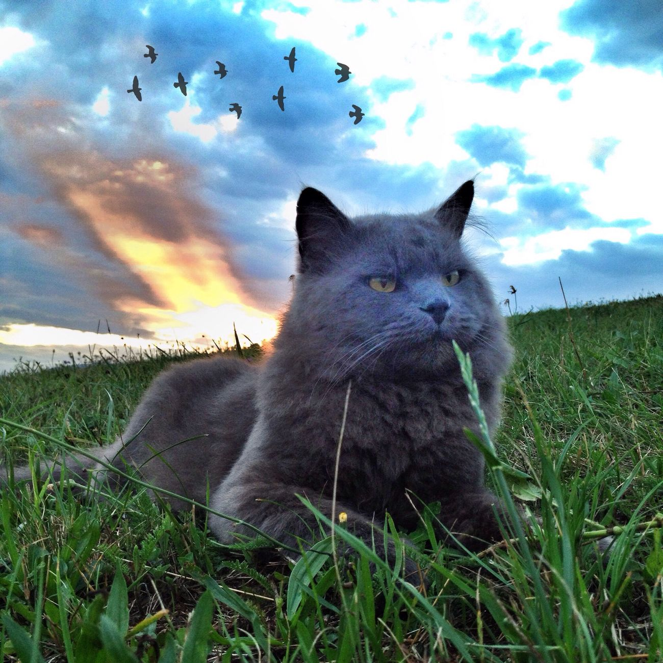 Hello !!! Hello World Enjoying Life EyeEm Best Shots - Landscape EyeEm Nature Lover
