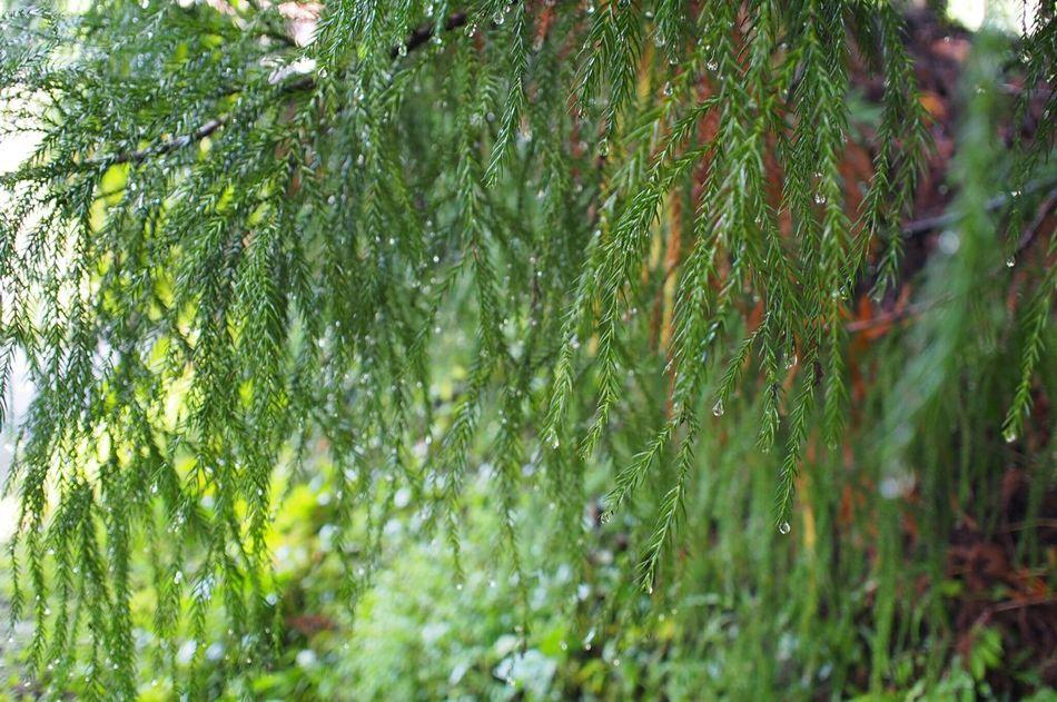 杉並木街道 日光 Nikko Japan Nature Nature Photography Japan Photography EyeEm Gallery EyeEm