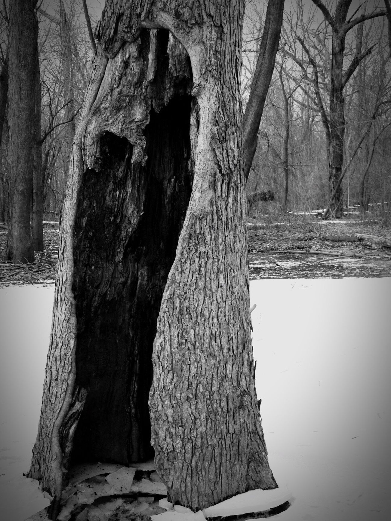 Taking Photos Black & White Blackandwhite Tree Trunk