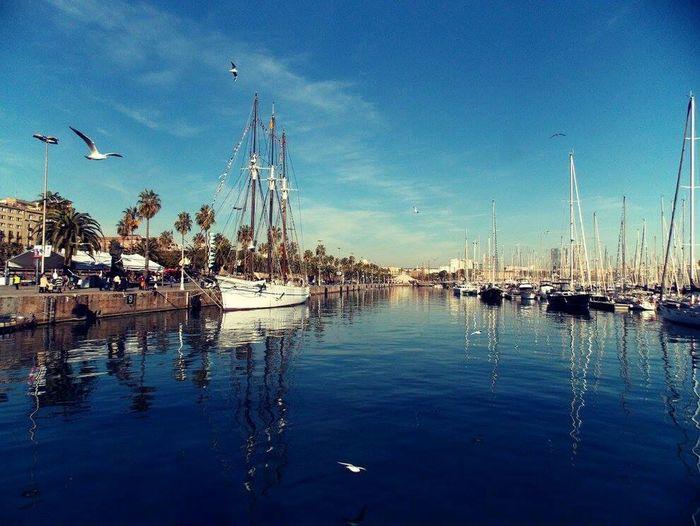 First Eyeem Photo Marinabay Barcelona Marina Port De Barcelona  Birds Boats Beautiful Day