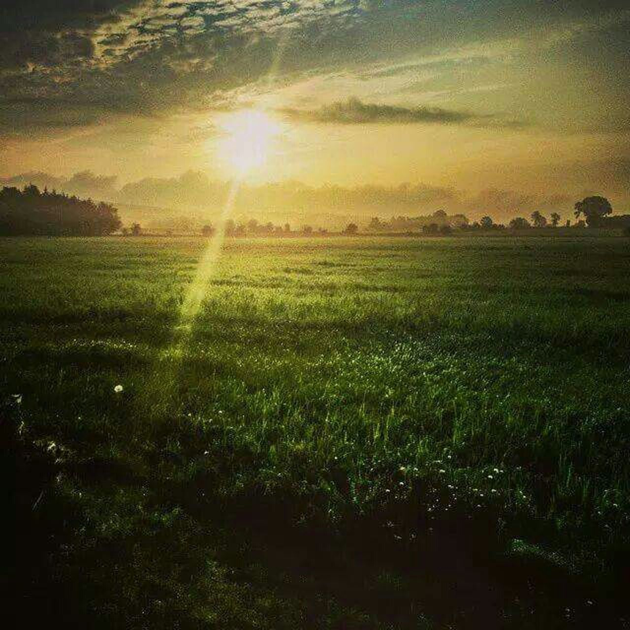 field, sunbeam, nature, sunlight, agriculture, sun, beauty in nature, landscape, tranquil scene, sunset, scenics, tranquility, growth, rural scene, no people, outdoors, grass, day, sky, freshness