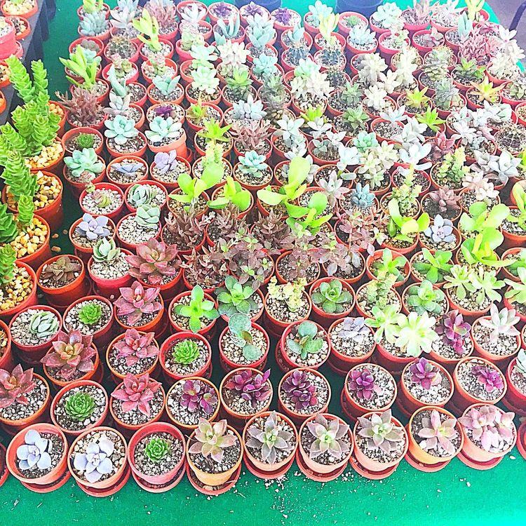 Cdmx Mexico Color Colorful Colors Colours Flower Collection Flowers Flower Flowerporn Flowerpower Flower Head