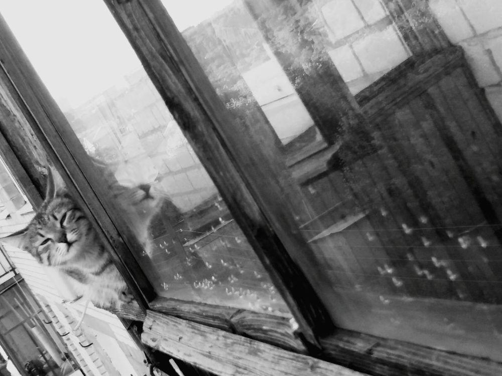 After rain Window Rainy Days Rain Window View Cats 🐱 Looking Through Window No People One Animal Brown Cat