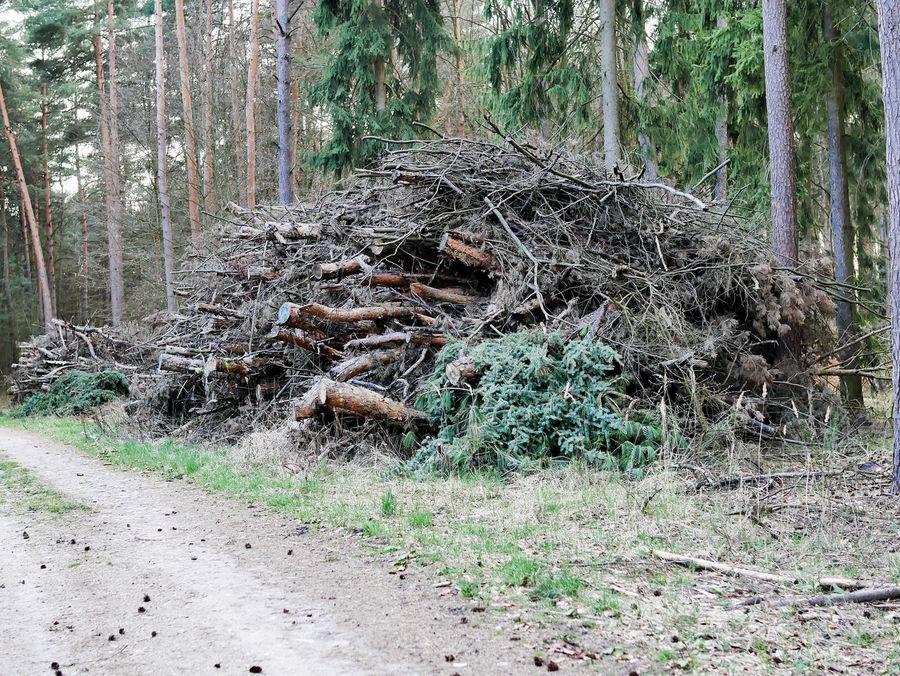 Branch Brandenburg Day Deforestation Destruction Forest Grass Growth Haufen Holz Holzhaufen  Holzwirtschaft Log Nature No People Outdoors Tranquility Tree Tree Trunk Unordnung Wald Waldspaziergang Waldsterben Weg Wood