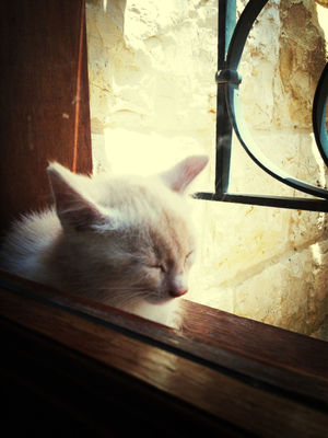 sleeping cat at Amchit-Al saha by Christelle Lahoud