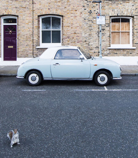 Nissan Figaro and a photobomb Photobomb London Car Cars Carspotting Auto Soloparking Check This Out Taking Pictures Taking Photos City Urban Urbanphotography Streetphotography Autoportrait Classiccar Classic Cars Classic Car Squirrel