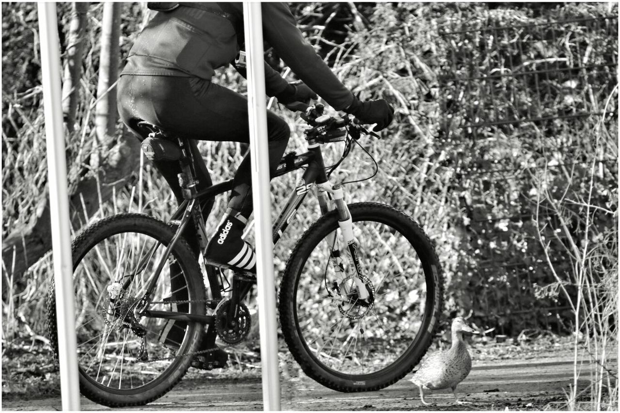 bicycle, transportation, outdoors, day, real people, one person, men, people