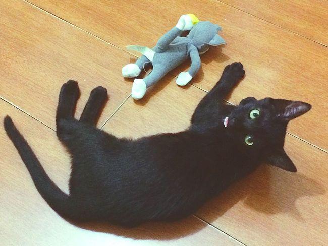 Selinakyle Cat♡ Lazysunday