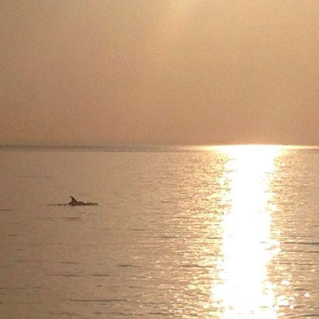 вчерашняяпоездкаудалась мореэмоций Закат дельфины