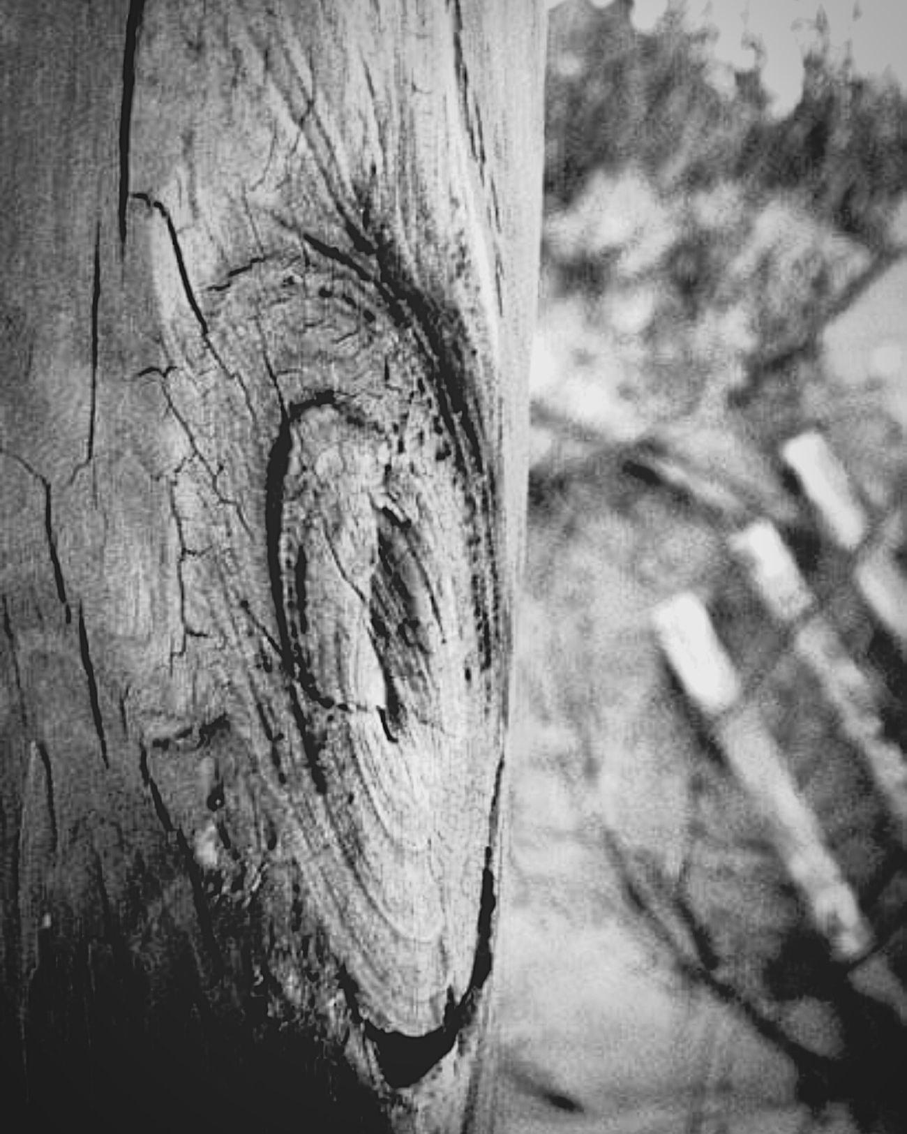 Beachphotography Beach Wood Textures And Surfaces Texture Imperfection Imperfection Is Beauty Blackandwhite Shades Of Grey