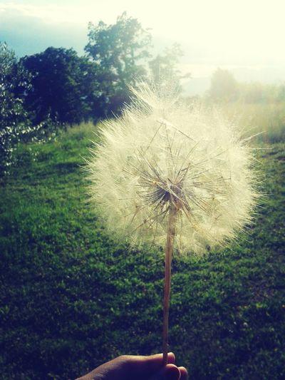 • Make a wish • Nature Flowers Beautiful Enjoying Life