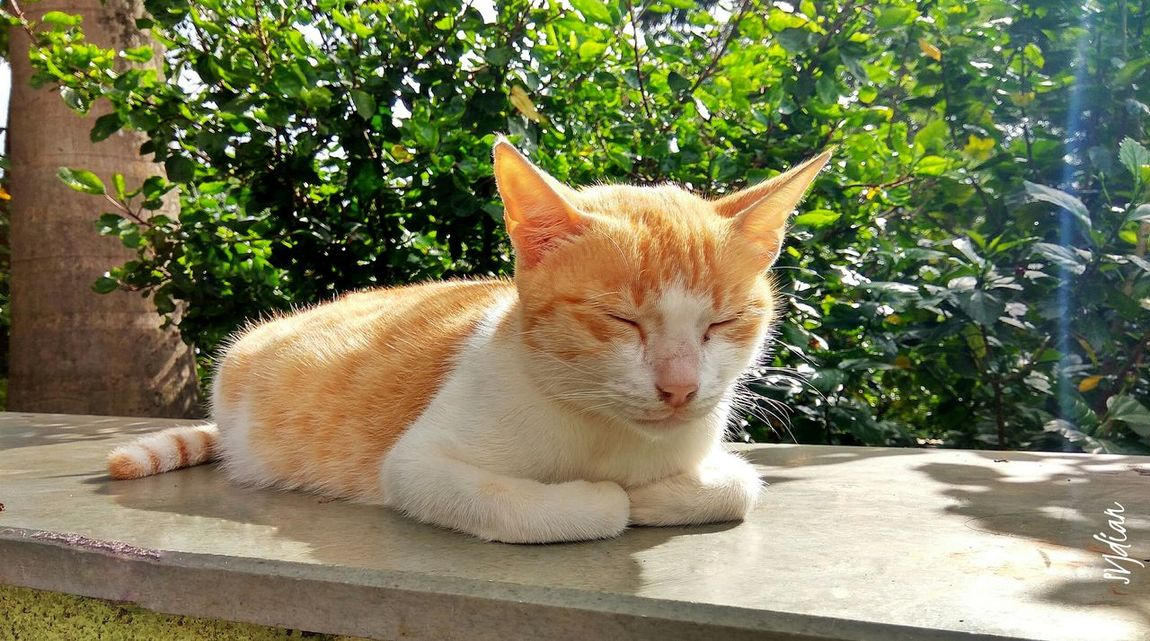 Colour Of Life Pet Cats 🐱 Sleeping Cat Cat♡ Afternoon Chilling Cat In The Sun Chill Out Brown Cat  White Cat Redmi Note 3