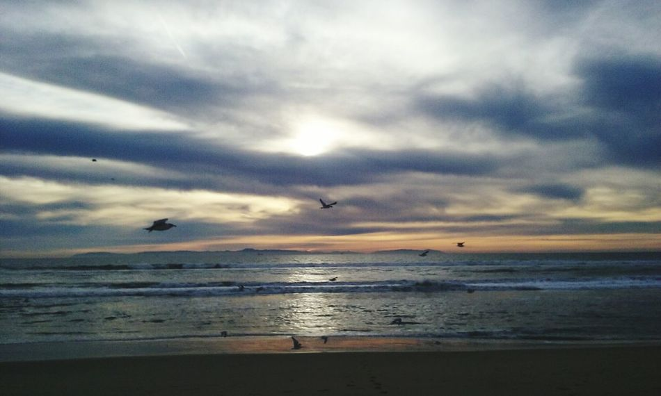 Sunset Nature Photography Outdoors Beach Sandy Beach Sky And Clouds Ocean Ocean View Birds Sky_collection Outdoor Photography Huntingtonbeach Surf City USA Blue Wave
