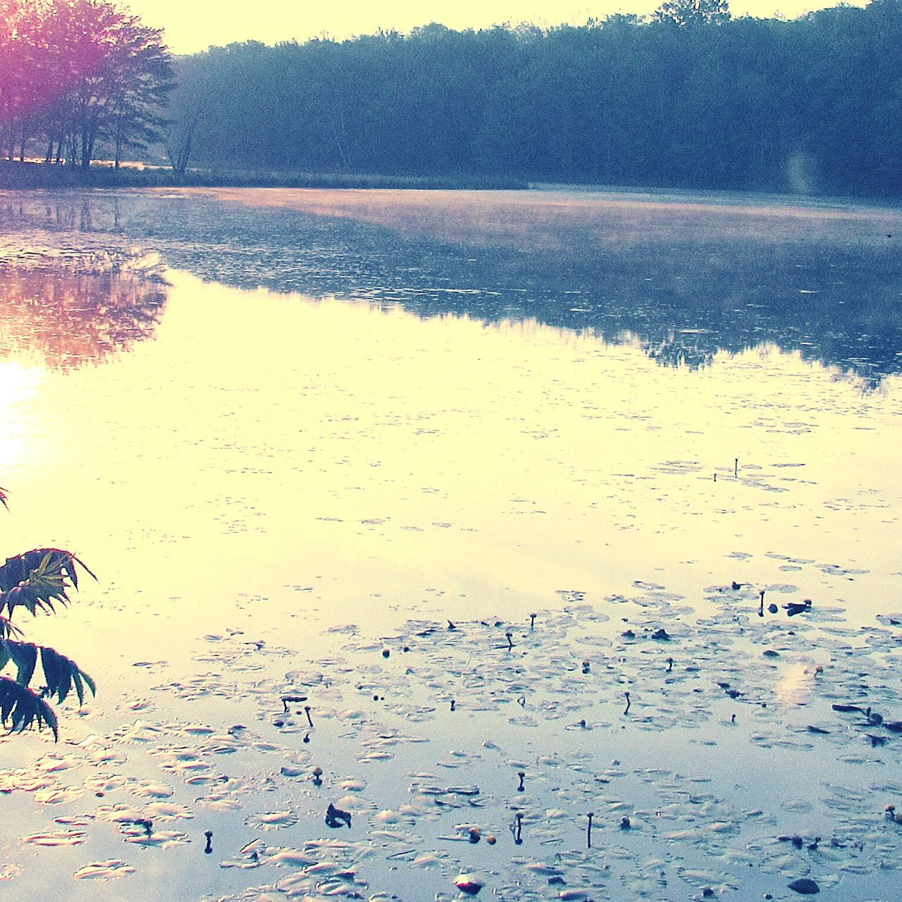 water, nature, no people, beauty in nature, lake, scenics, tranquility, outdoors, beach, tree, day, bird
