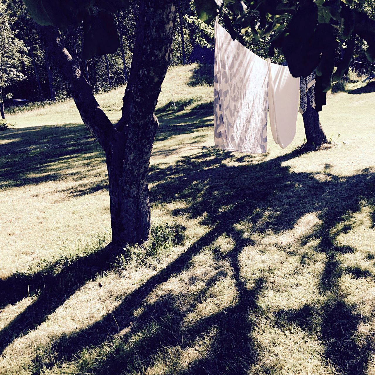 shadow, tree, sunlight, laundry, day, hanging, drying, tree trunk, nature, growth, outdoors, grass, no people