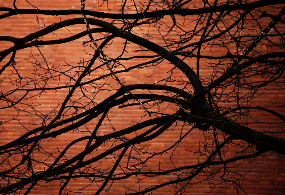 Bare Tree Branches Close-up Day March 2017 Milano No People Outdoors Red Wall Silhouette Tree Tree Trunk