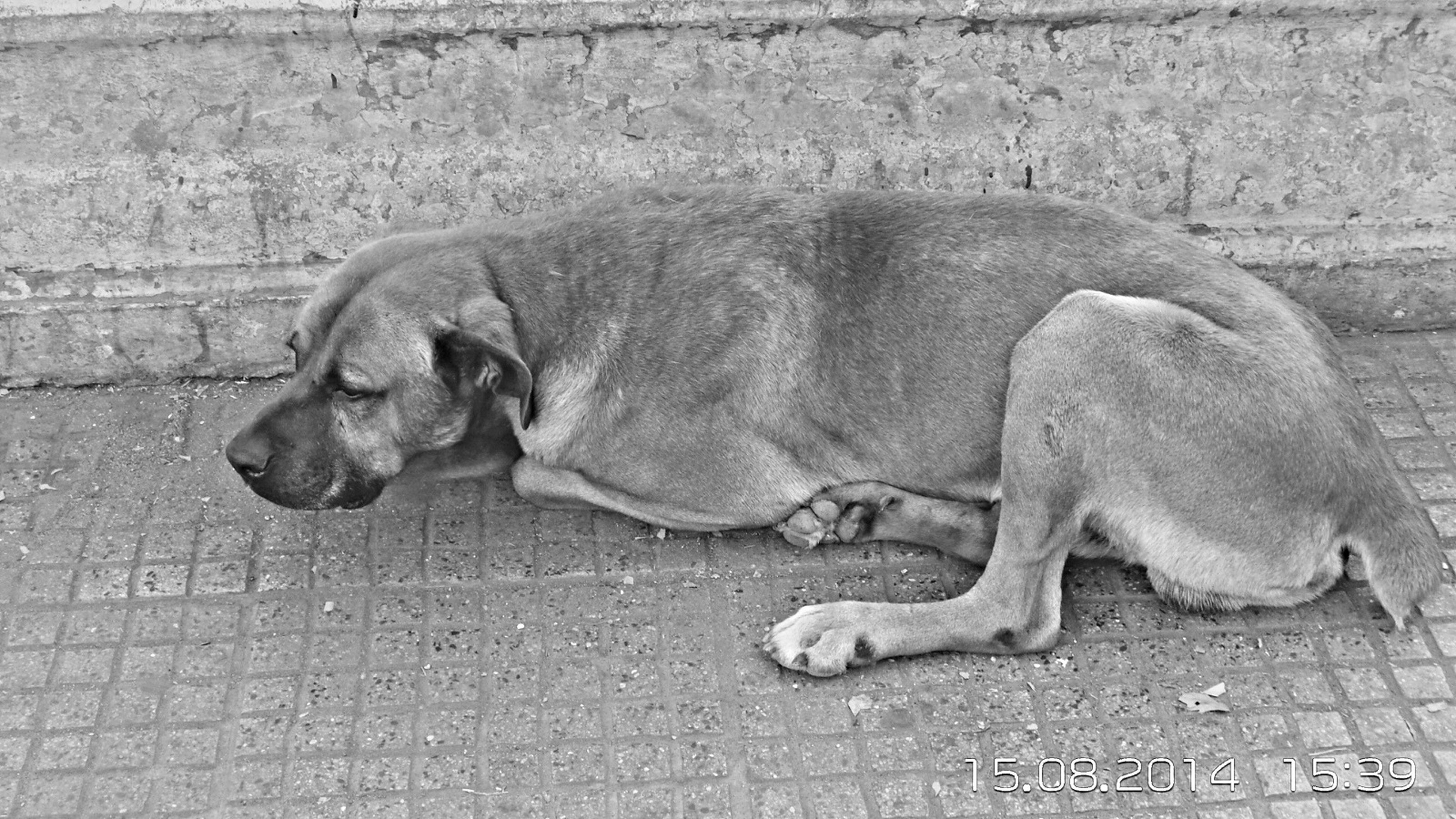 animal themes, mammal, one animal, dog, domestic animals, relaxation, two animals, full length, high angle view, sleeping, resting, lying down, pets, wildlife, day, no people, outdoors, animals in the wild, zoology, sitting