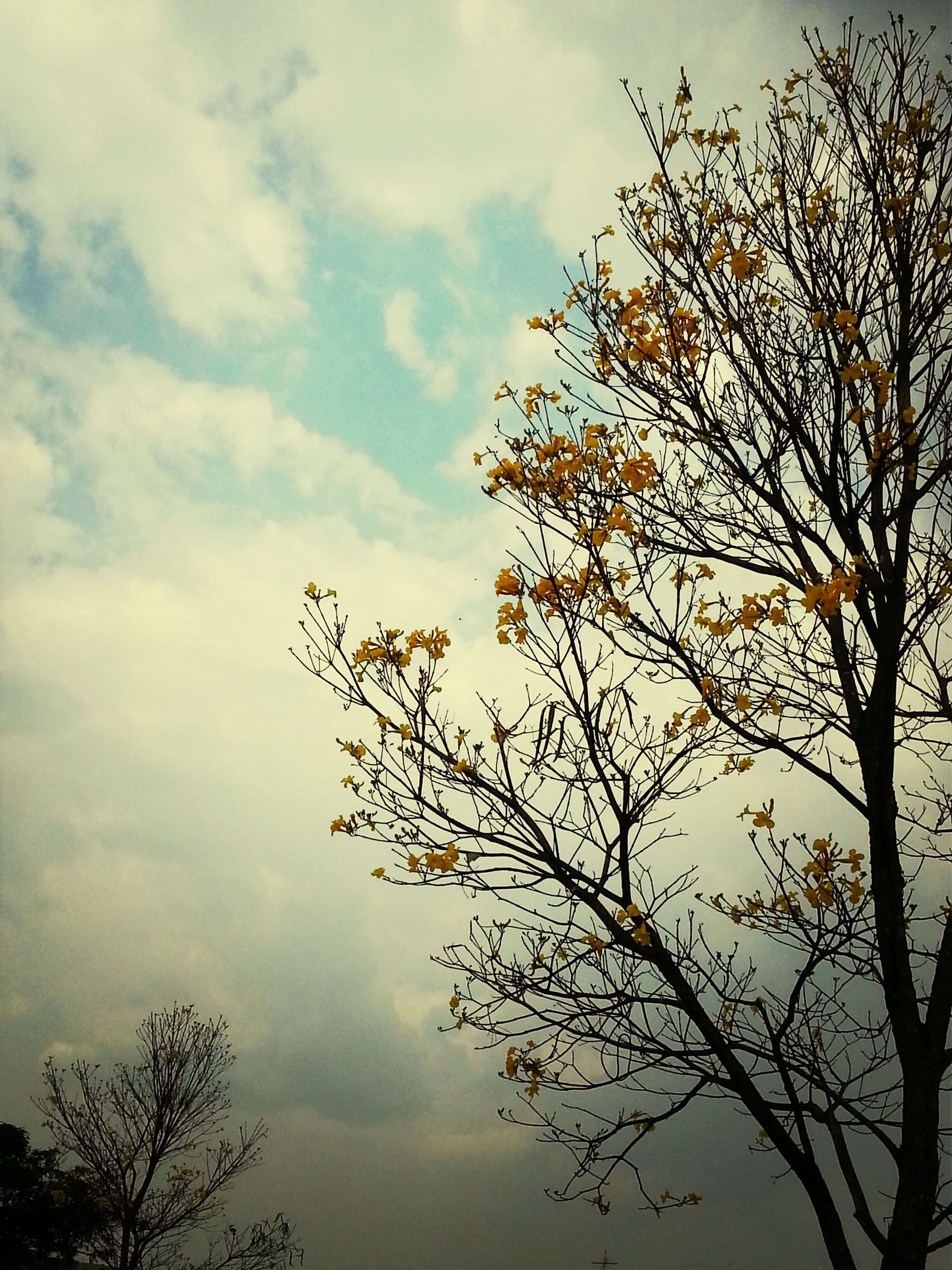 low angle view, sky, branch, tree, nature, cloud - sky, silhouette, growth, bare tree, beauty in nature, tranquility, cloud, twig, cloudy, leaf, scenics, outdoors, no people, dusk, day