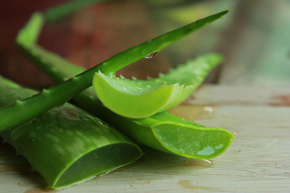 Aloe Aloe Vera Alternative Background Beauty Botany Cactus Care Cosmetic Gel Green Color Health Healthy Herb Herbal Leaf Medicine Nature Plant Skincare SLICE Spa Treatment