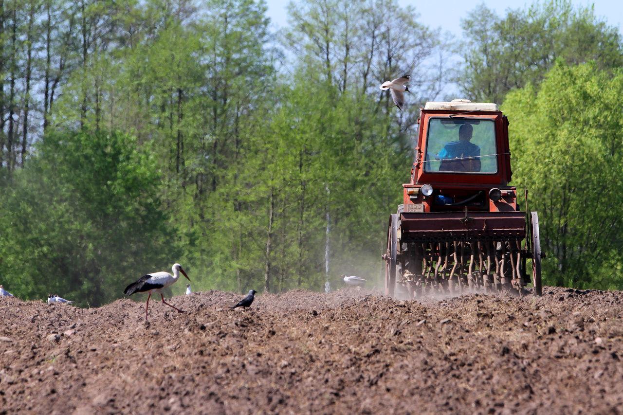 Agriculture Biebrza Biebrza National Park Bird Farm Worker Farmer Plowed Field River Rural Scene Stork Tractor Working