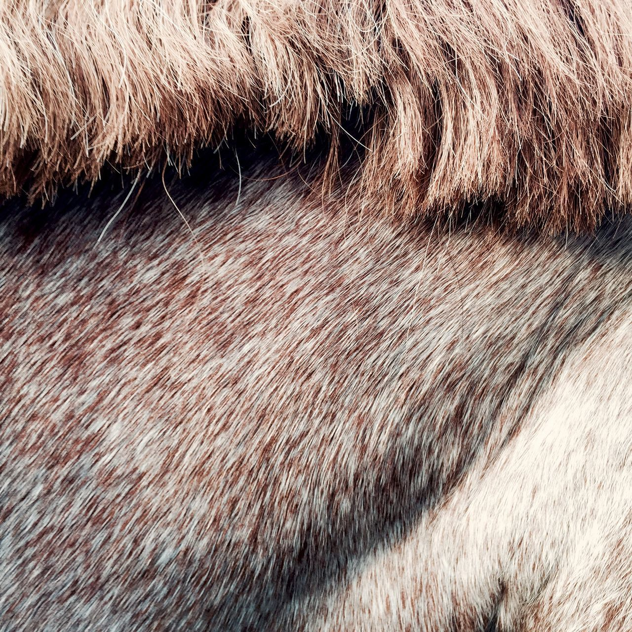 Horses Detail