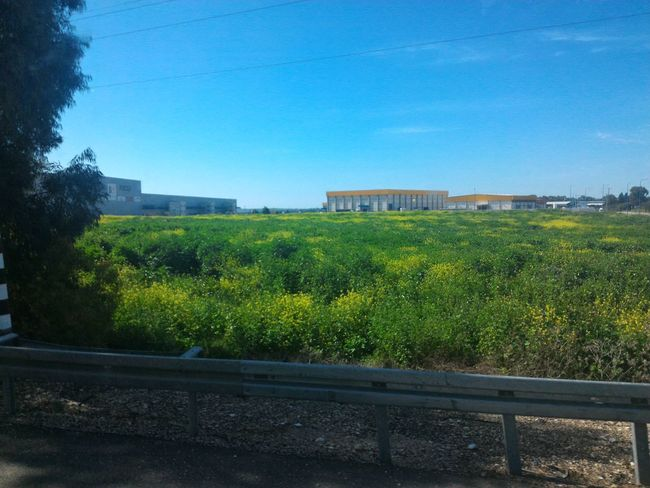 Passed By a Factory Driving to a Hike in Israel Grass Looking Out Of The Window