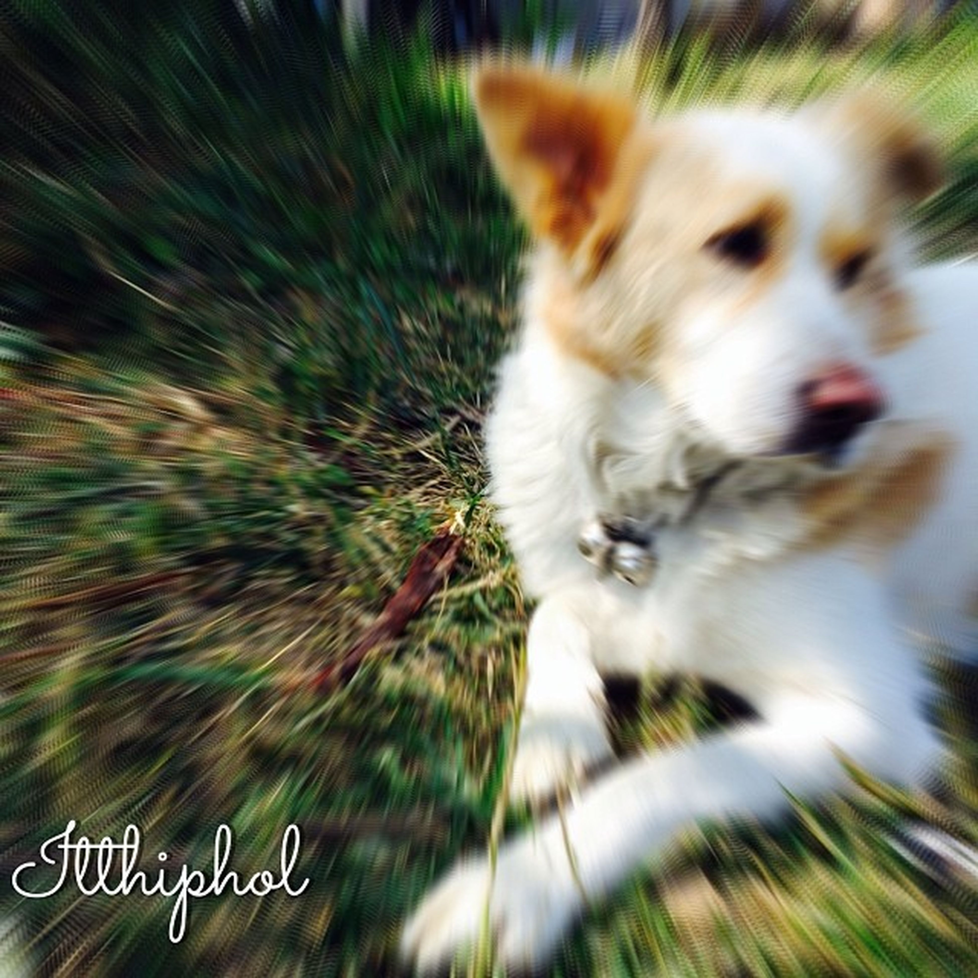 mammal, animal themes, pets, domestic animals, one animal, grass, domestic cat, field, selective focus, cat, day, focus on foreground, no people, close-up, nature, outdoors, dog, two animals, plant, growth