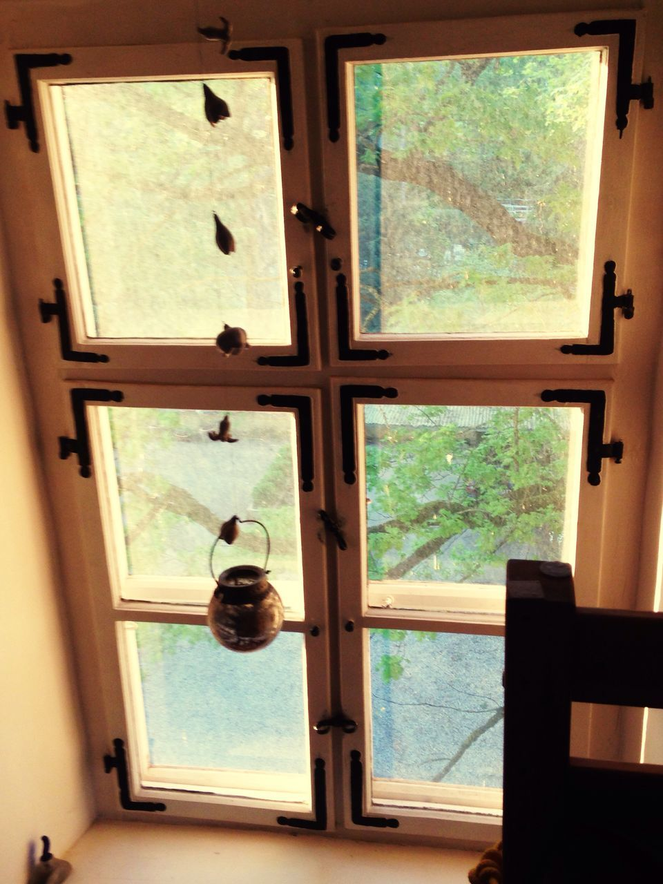 window, door, indoors, day, safety, no people, home interior, tree, close-up, animal themes, nature, mammal