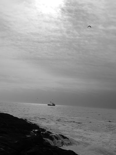 Go back home Sea Sky Beach Nature No People Horizon Over Water Water Beauty In Nature Day Monochrome Photography Photographer Flying Animal Themes Bird Sea Animals In The Wild One Animal Animal Wildlife Animal Body Part Cloud - Sky Sky Outdoors No People Nature Beach