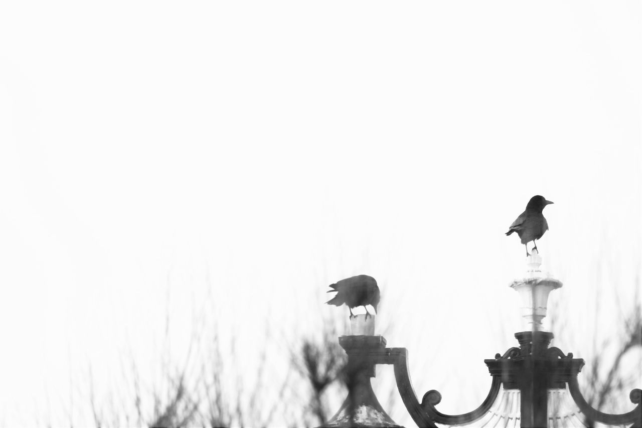 Bird Black And White Crows On Lamp Post Faded Tranquility Perspectives On Nature Black And White Friday Black And White Friday