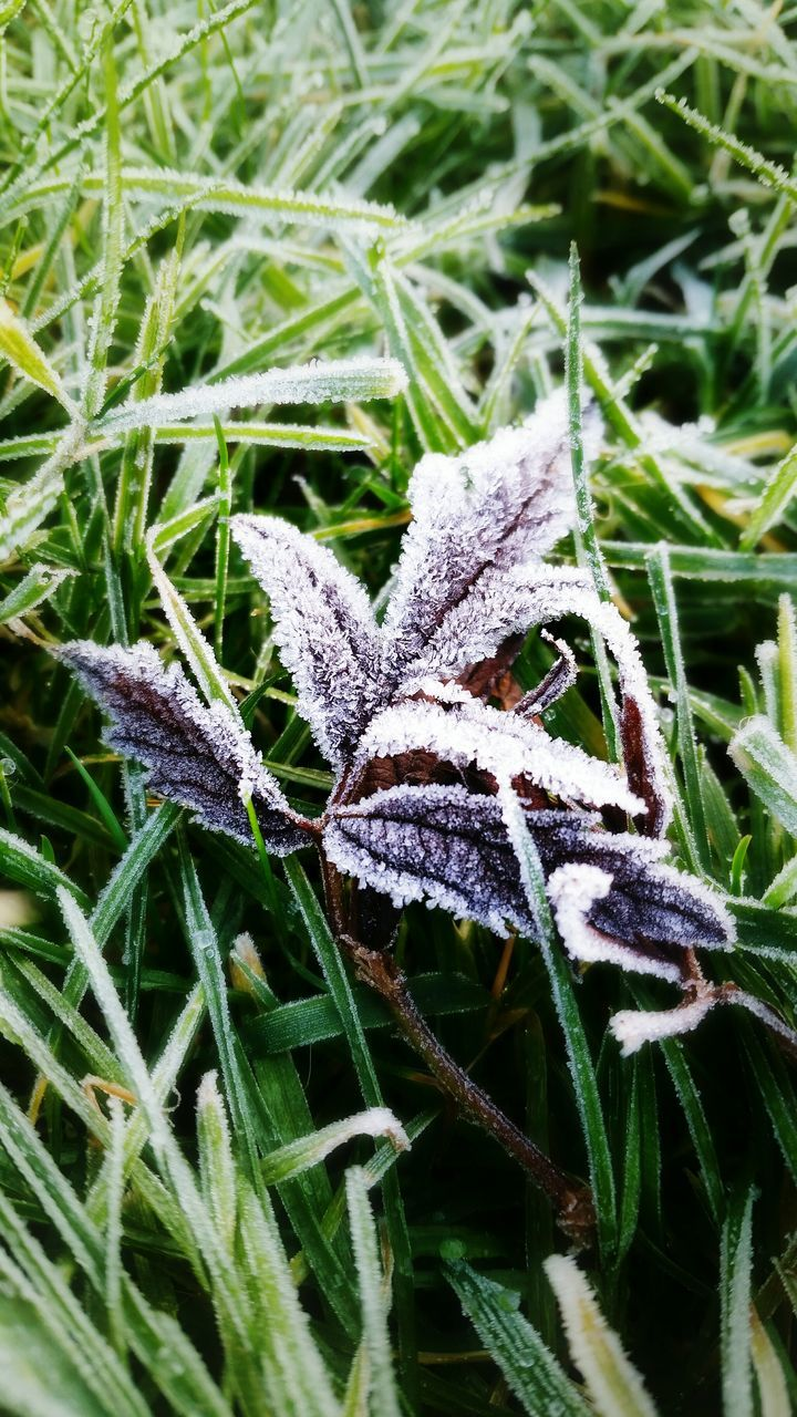 High Angle View Of Frozen Dry Leaf On Grass
