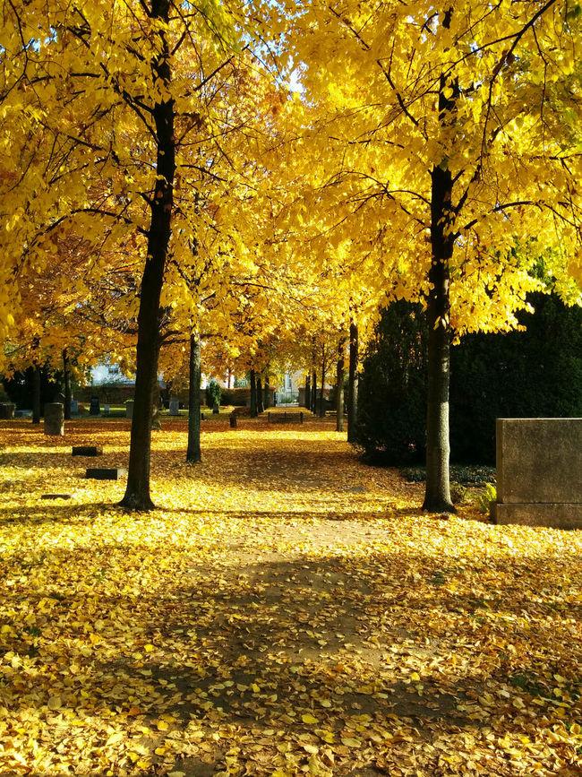 Beautiful autumn. Autumn Change Leaves Nature Outdoors Season  Tree Yellow