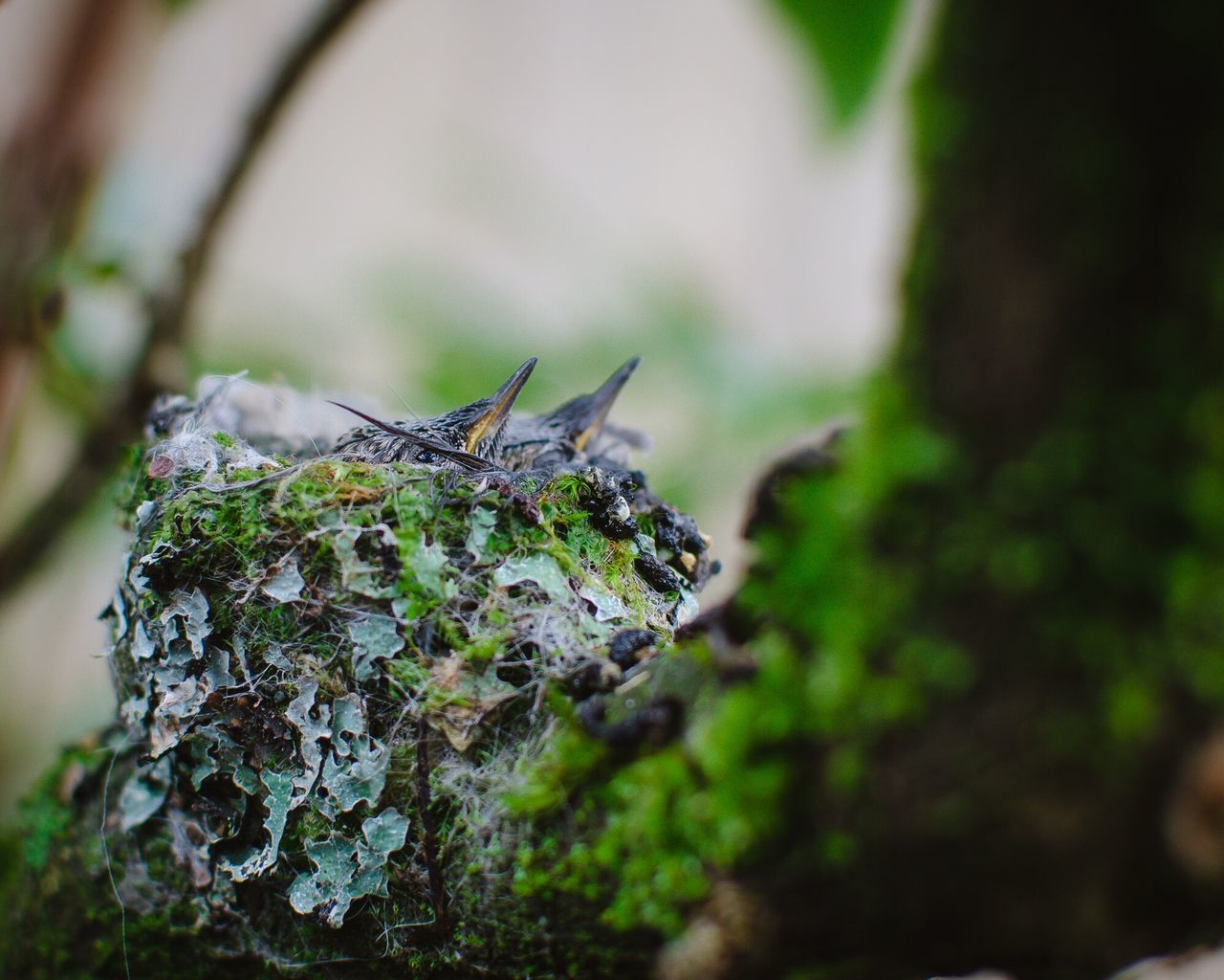Hummingbird chicks. 18 days old. Animals In The Wild Animal Themes One Animal Nature Insect No People Outdoors Day Animal Wildlife Close-up Hummingbird Bird Photography