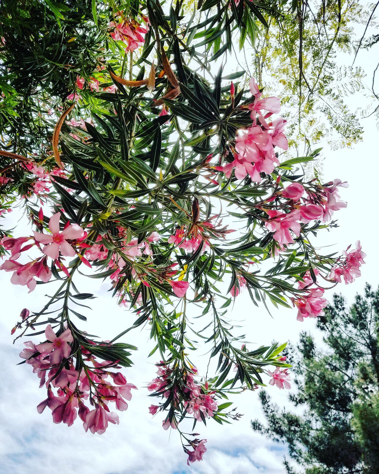 Tree Nature Growth Flower Beauty In Nature Low Angle View Sky BestofEyeEm EyeEm Masterclass EyeEmBestEdits EyeEm Best Shots BestEyeemShots Premium Collection EyeEm Vision