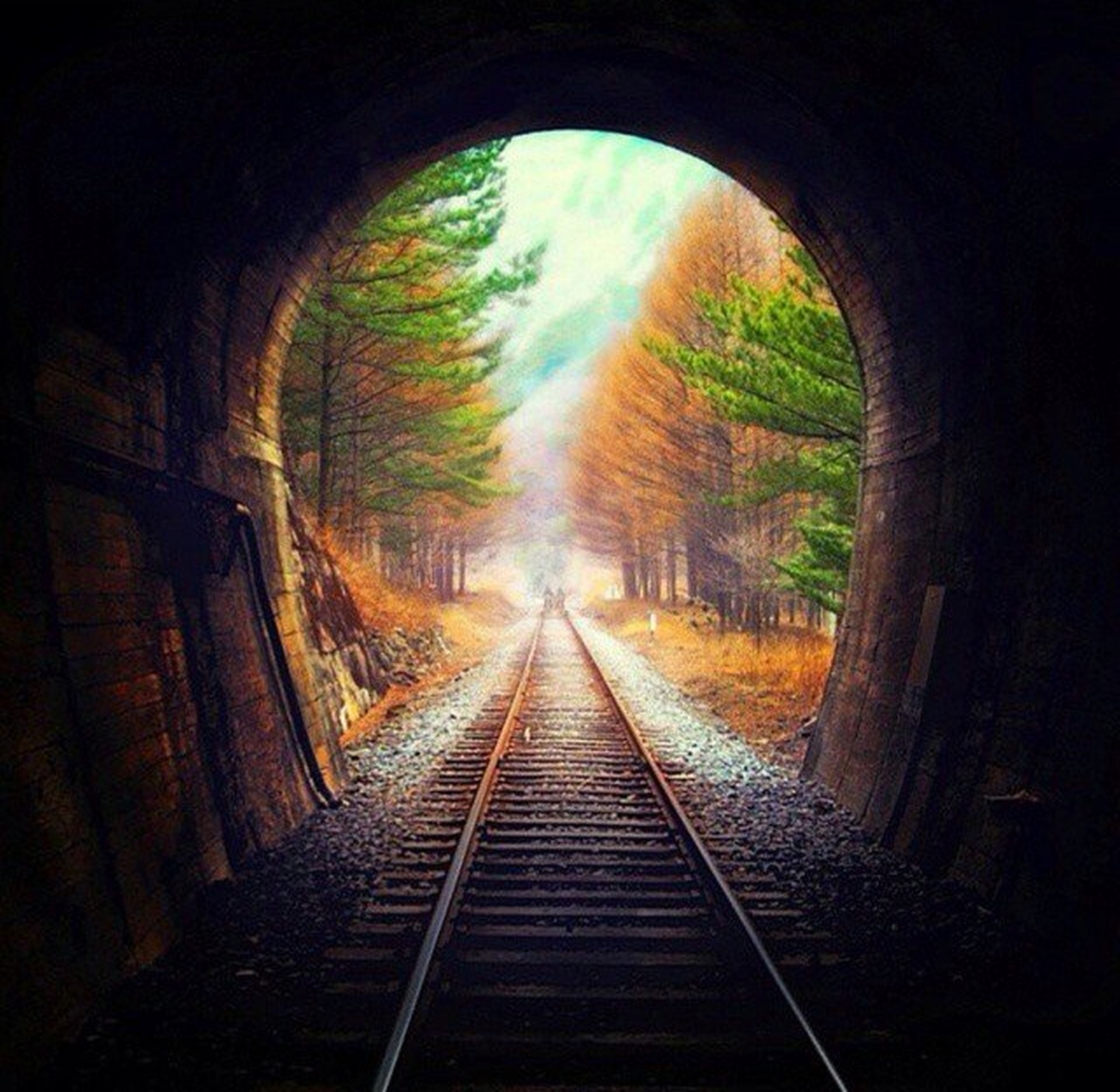 the way forward, arch, transportation, tree, tunnel, indoors, diminishing perspective, railroad track, vanishing point, built structure, rail transportation, architecture, no people, sky, nature, day, archway, tranquility, forest, public transportation