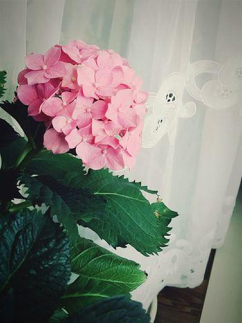 지금은 더 부농부농해짐! Flowers 꽃 수국