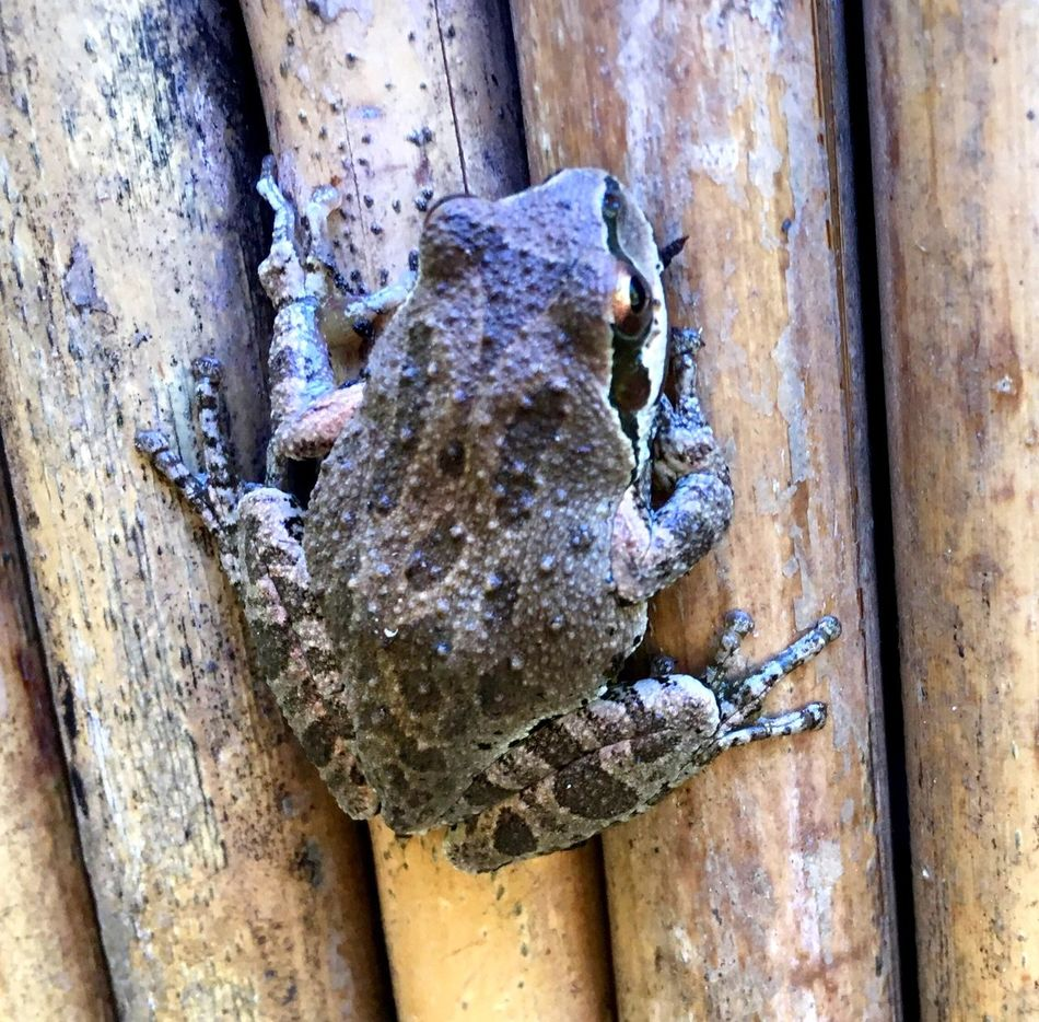 Beautiful Nature The Great Outdoors Lucky Me Big Sur, Ca. Frog Frogs,chilling Fence IPhone Photography Taking Photos