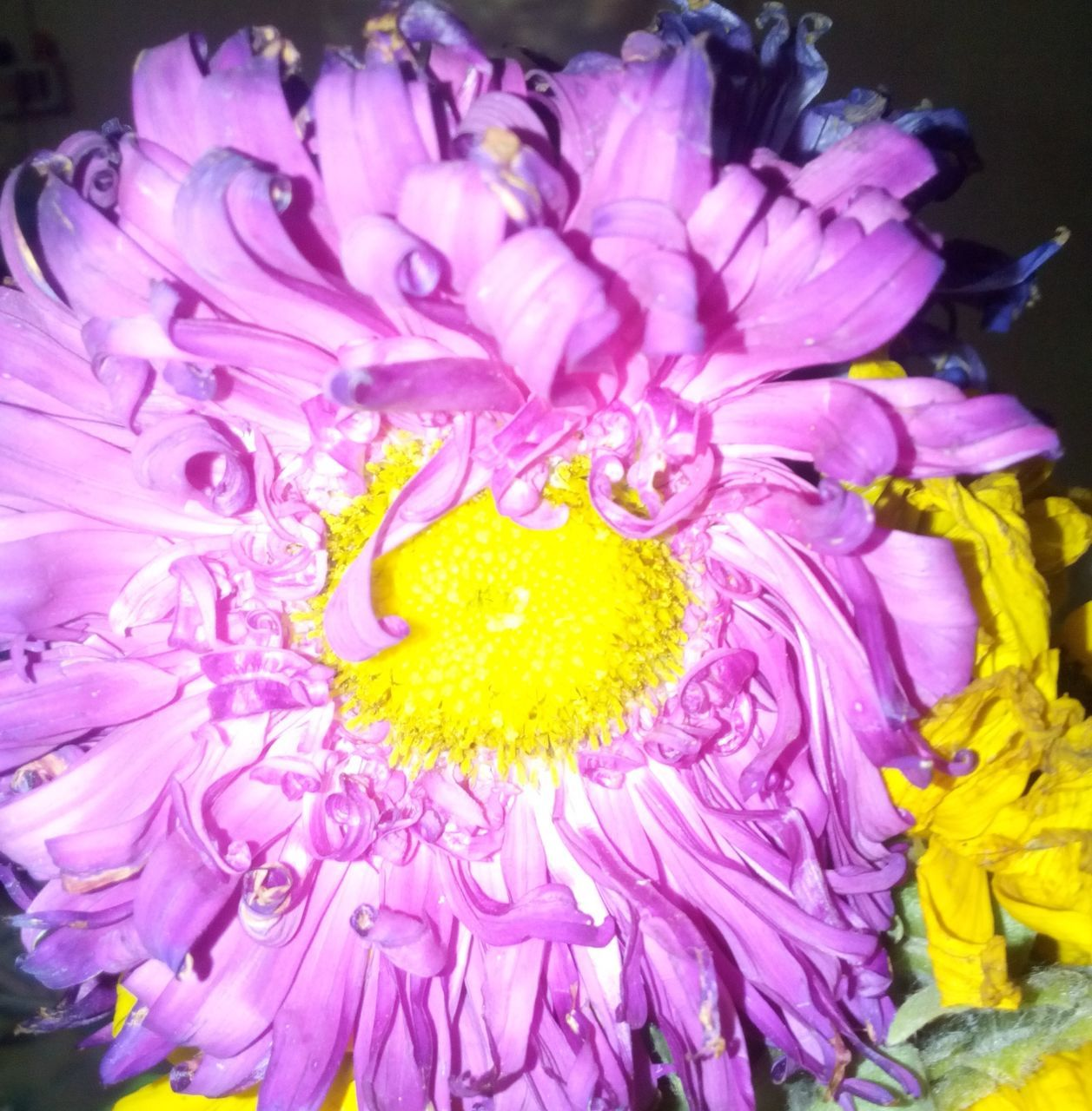 flower, petal, no people, yellow, fragility, beauty in nature, close-up, flower head, nature, freshness, day